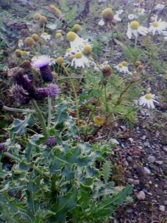 Wildflowers And Stony Ground. Tullos Hill Oct 11