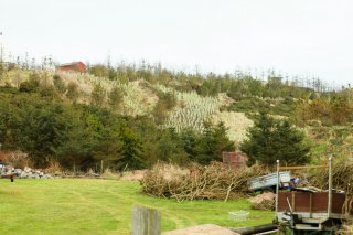 Attempt To Plant Forest Between Milne Home And Sea View 16 Feb 13