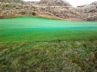 The Grass Is Greener On The Other Side Once Its Dyed. By SK16 Feb 2013