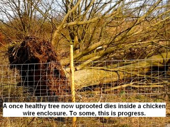 a-once-healthy-tree-now-uprooted-dies-inside-a-chicken-wire-enclosure-this-is-progress-to-some