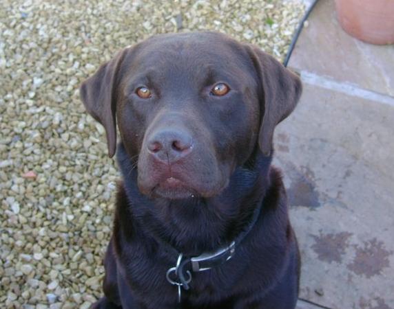 Facebook Lost Pet Service - Aberdeen Voice