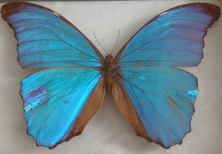 105herbarium_butterfly1_rdax_800x555