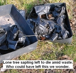 a-lone-tree-sapling-left-to-die-amid-tree-sapling-waste-who-could-have-left-this-we-wonder