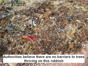authorities-believe-there-are-no-barriers-to-trees-thriving-on-this-rubbish