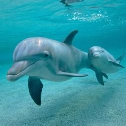 dolphinsqupic2