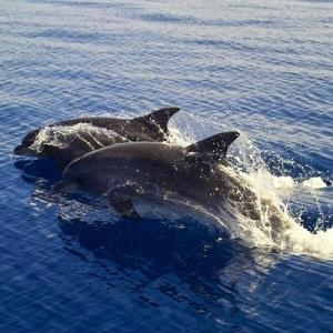 dolphinsqupic3