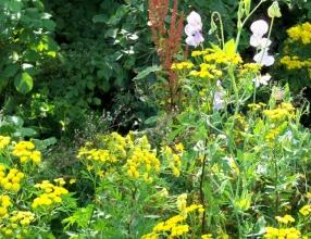 A mini meadow in my garden is a feast for wildlife
