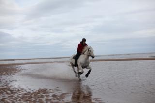 horse-forvie2