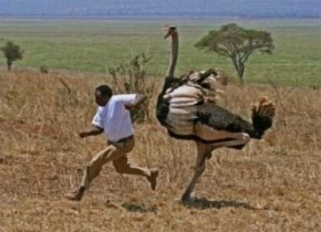 man-chased-ostrich