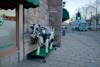 plastic-cow-on-wheels