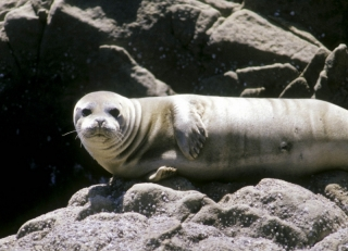 friendly looking seal