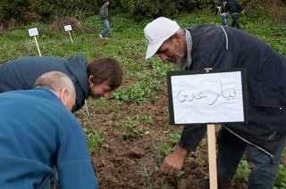 92-tulkarem-tree-planting