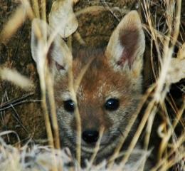 fox2pic
