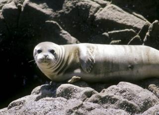 friendly looking seal