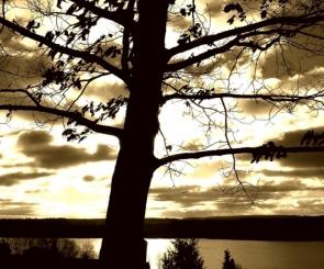 TREE OVER SUN (3)  © Egidijus Mika   Dreamstime.com