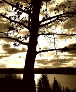 TREE OVER SUN  Feat  © Egidijus Mika   Dreamstime.com