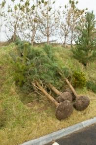 treesbunds