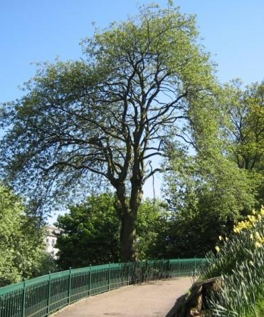 utg-tree
