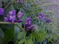 Wildflowers At Tullos