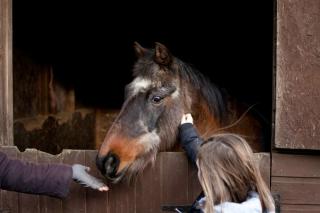 willowshorse2