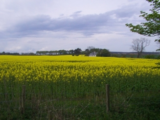 a-green-field-or-a-high-street