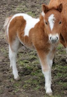 bertie_small-foal-june-2013