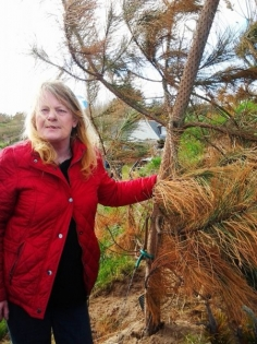 Susan Munro with another dying tree 23 04 13