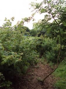 Sunnybank Path