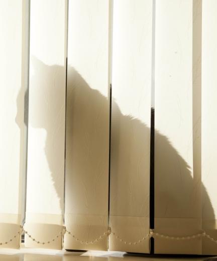 Burnhervie duncan harley tommy cat feat