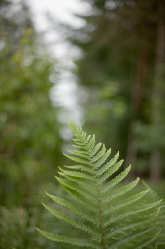 frond177