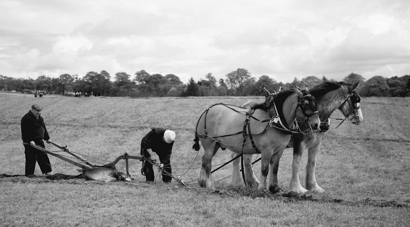 Plough - Credit: Duncan Harley and Janice Rayne