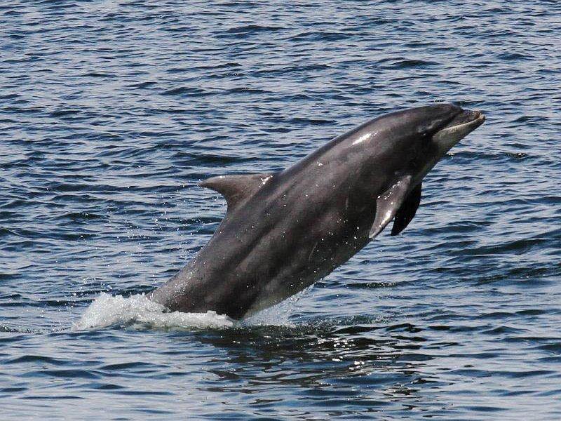 Elizabeth Harley moray dolphin