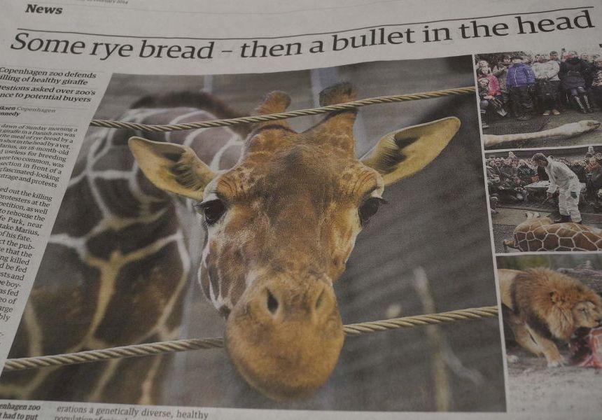 Giraffe duncan harley