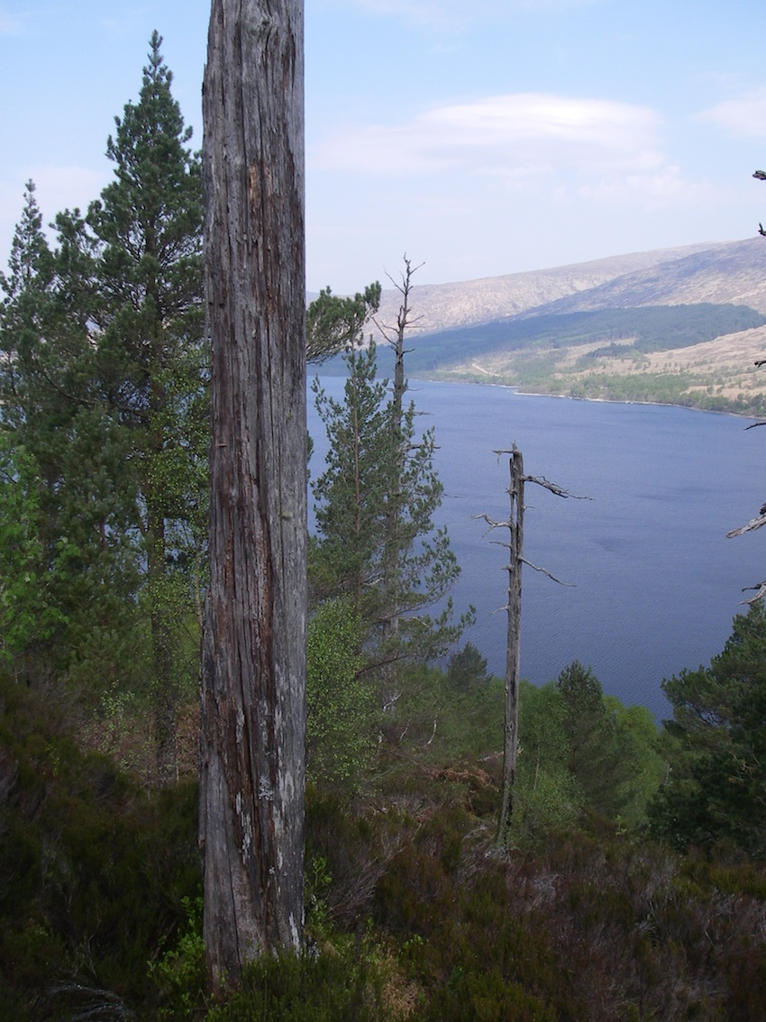 Loch Arkaig (small)