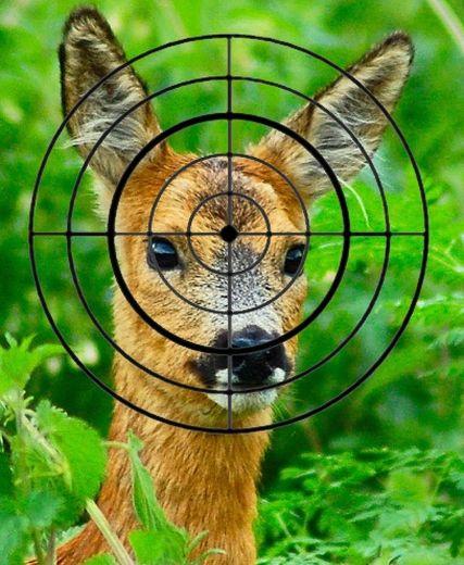 deershotfeat2