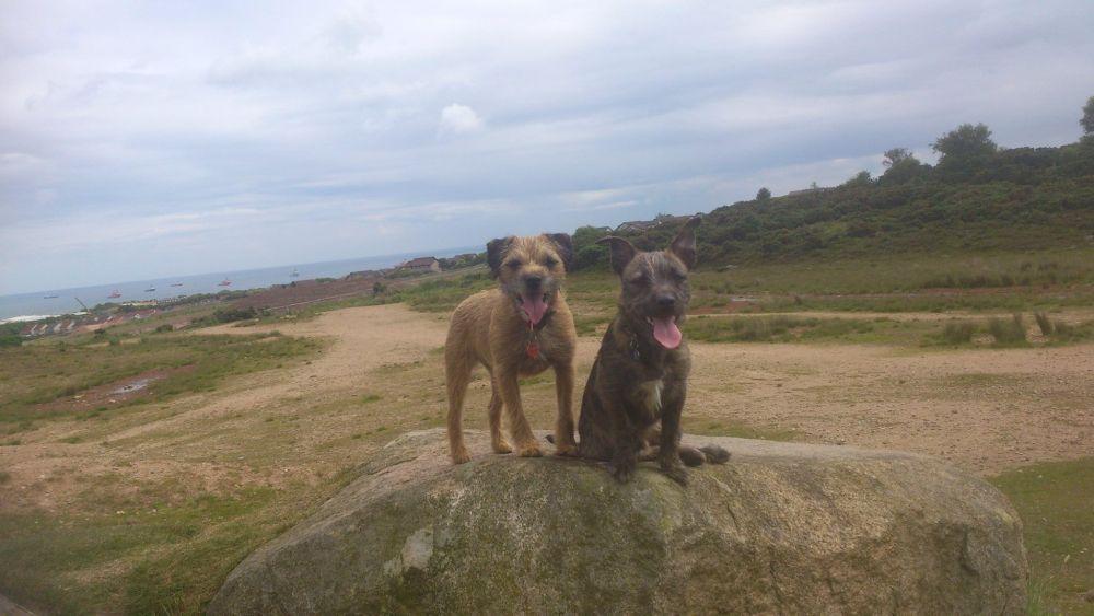 elaine dogs 2