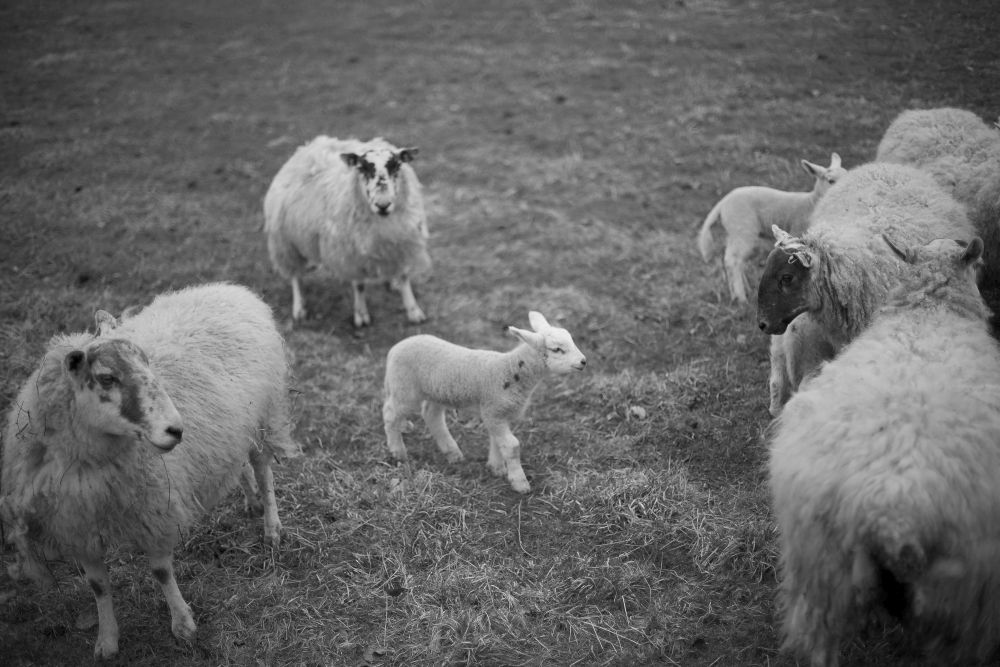 lamb2ed_edited-1
