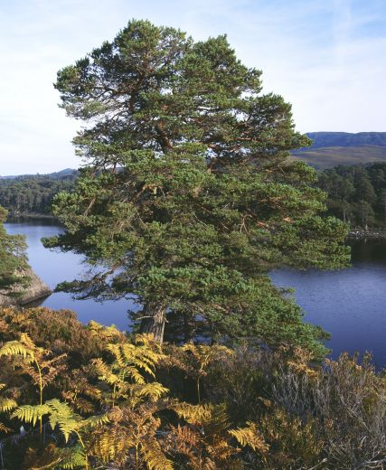 Funding Hope For Conservation Of Iconic Scottish Glen