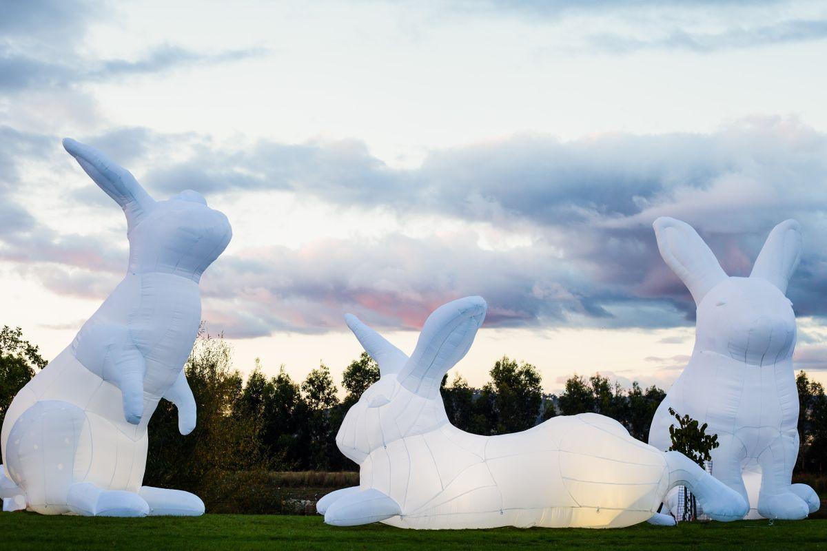 Amanda Parer giant rabbits (1)