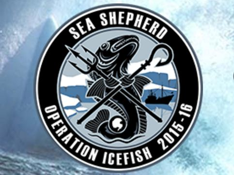 Sea Shepherd Operation Icefish2