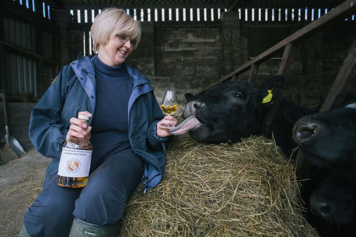 Monday 28th March 2016, Aberdeen, Scotland, SOSWF urging cattle farmers to follow the lead of Japanese producers of Kobe beef, but instead of drinking beer, Speyside cattle will be fed draff from distilleries, drink whisky, and will have traditional Scottish music played to them. Pictured: Ann Miller, Spirit of Speyside Whiskey Festival. (Photo: Ross Johnston/Newsline Media)