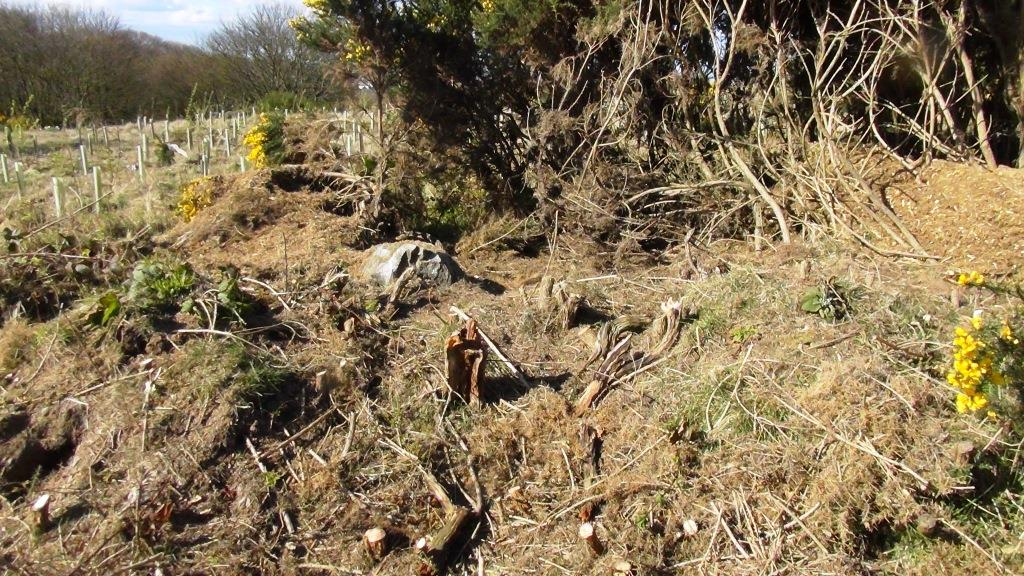 gorse destruction 30 april 2016 skelly