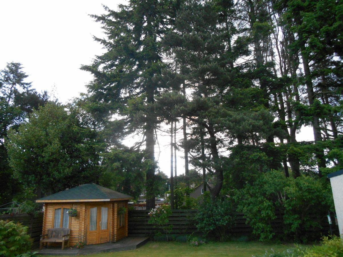 Peterculter tree fell (5)