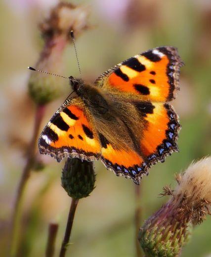 Duthie Park Butterfly Workshop 13 July – Places Left
