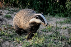 007-badgers-12-7-16-by-dod-morrsion-photography-2