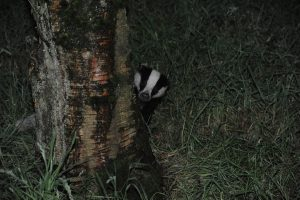011-badgers-16-7-16-by-dod-morrison-photography-2