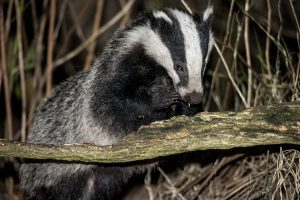 013-badgers-4-9-16-by-dod-morrison-photography-2