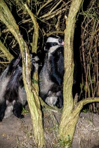 016-badgers-4-9-16-by-dod-morrison-photography-2b