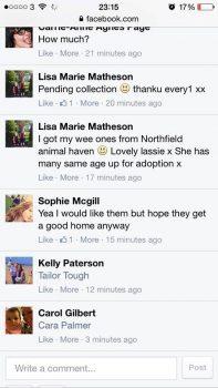 nah-sale-of-animals-2